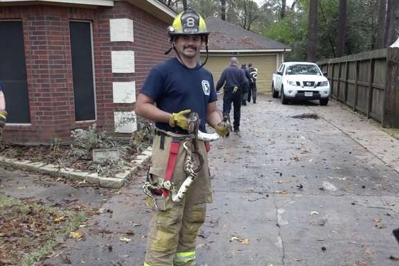 A firefighter poses with a snake rescued from a Conroe house fire.