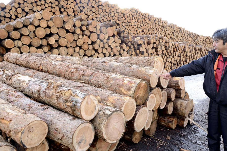Logs made from fallen trees, which will be used as wood pellets and other materials, are seen in Mukawa, Hokkaido, on Nov. 20. Photo: Japan News-Yomiuri Photo / Japan News-Yomiuri