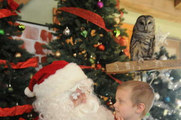 "Five-year-old Jace Moore of East Alton has a session with Santa ""Claws"" while Chili the Barred Owl keeps watch on Sunday at TreeHouse Wildlife Center."