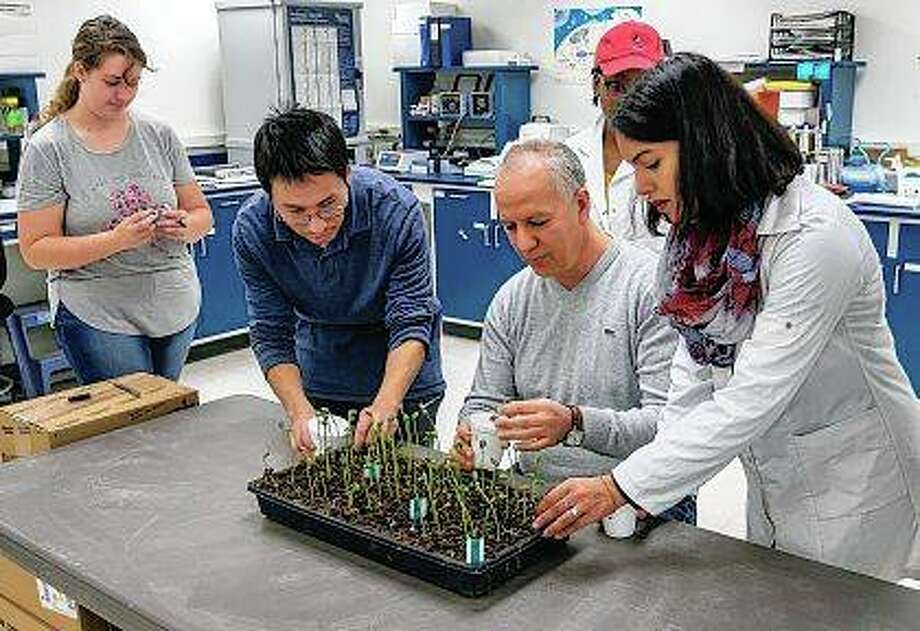 Khalid Meksem, a professor in the Department of Plant, Soil and Agricultural Systems at Illinois University Carbondale, and members of his research team Daniele Brookshier (from left), Zhou Zhou, Courtney Barnes and Oumaima Chetto, examine germinating soybean plants that are part of his research into developing soybeans that resistant to soybean cyst nematodes, a microscopic roundworm that feeds on the roots of soybean plants. Each year, soybean farmers across the country contribute a small, but significant, 0.0005 of a percent of their crop sales to soybean research, development and promotion. Photo: Byron Hetzler | The Southern (AP)