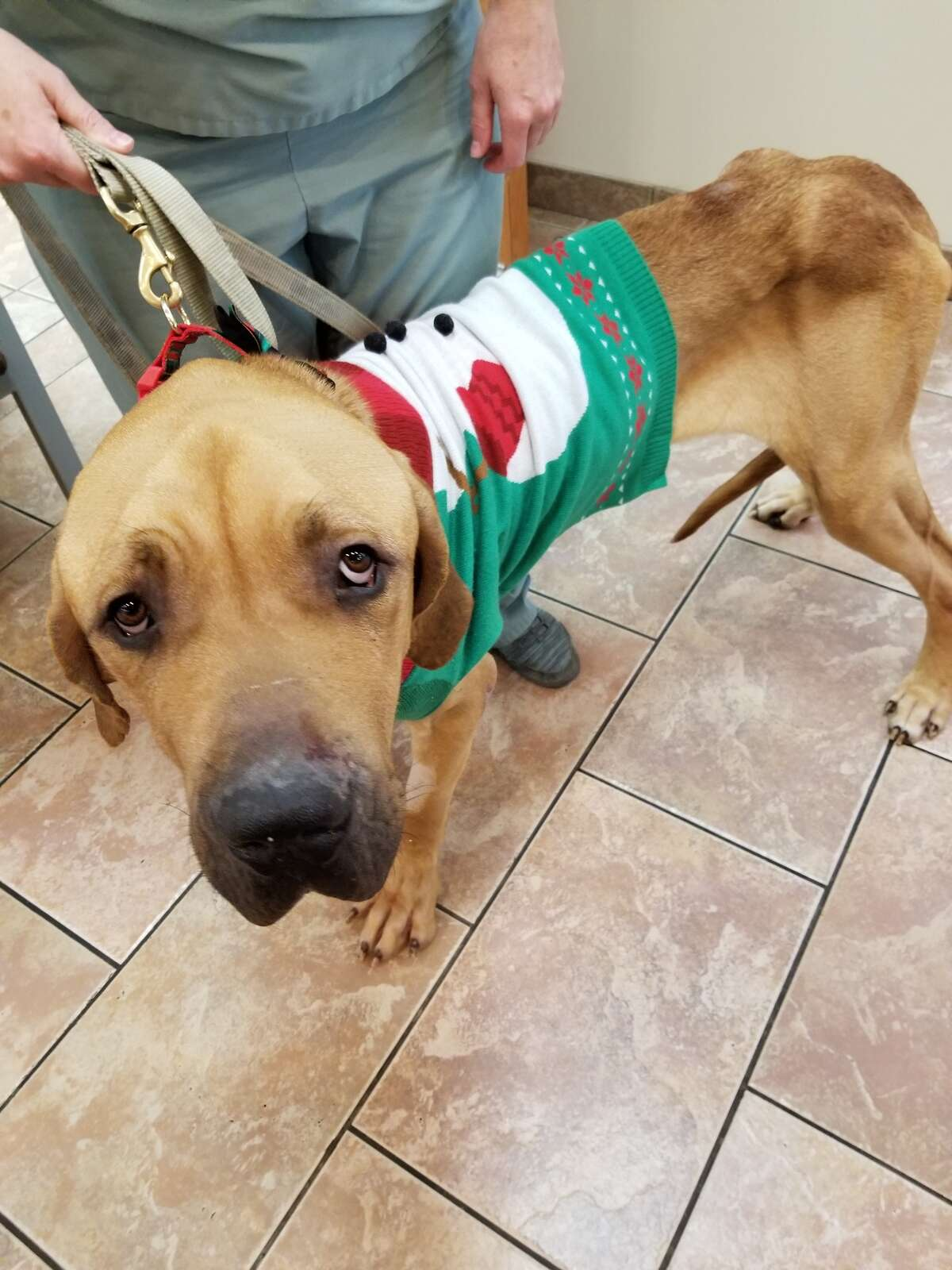 A $1,000 reward is being offered to help find the person or persons responsible for the abandonment of starving dog found early Tuesday, Dec. 4, 2018, in a Troy park..