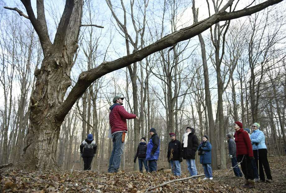 Greenwich Land Trust Conservation & Outreach Director Steve Conaway, Ph.D., speaks beneath a sugar maple tree during the Winter Walk at Greenwich Land Trust's Lapham Preserve in Greenwich, Conn. Tuesday, Dec. 11, 2018. Folks learned how to identify leafless trees by learning the diverse features of bark, branches, and buds, as well as tactics employed by flora and fauna to survive the cold winter months. Photo: Tyler Sizemore / Hearst Connecticut Media / Greenwich Time