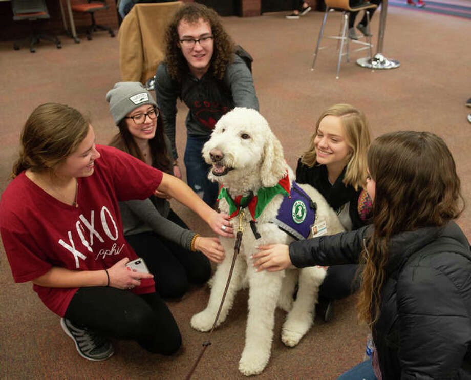 Students, from left: Fairen Woolard and Aleah Glodich and Austin Uhls, of West Frankfort; Brooke Snyder, of Alton; and Christa Becherer, of Kaiserslautern, Germany, gather round Izzy the Goldendoodle in Lovejoy Library. Photo: For The Telegraph