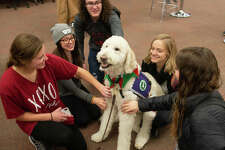 Students, from left: Fairen Woolard and Aleah Glodich and Austin Uhls, of West Frankfort; Brooke Snyder, of Alton; and Christa Becherer, of Kaiserslautern, Germany, gather round Izzy the Goldendoodle in Lovejoy Library.