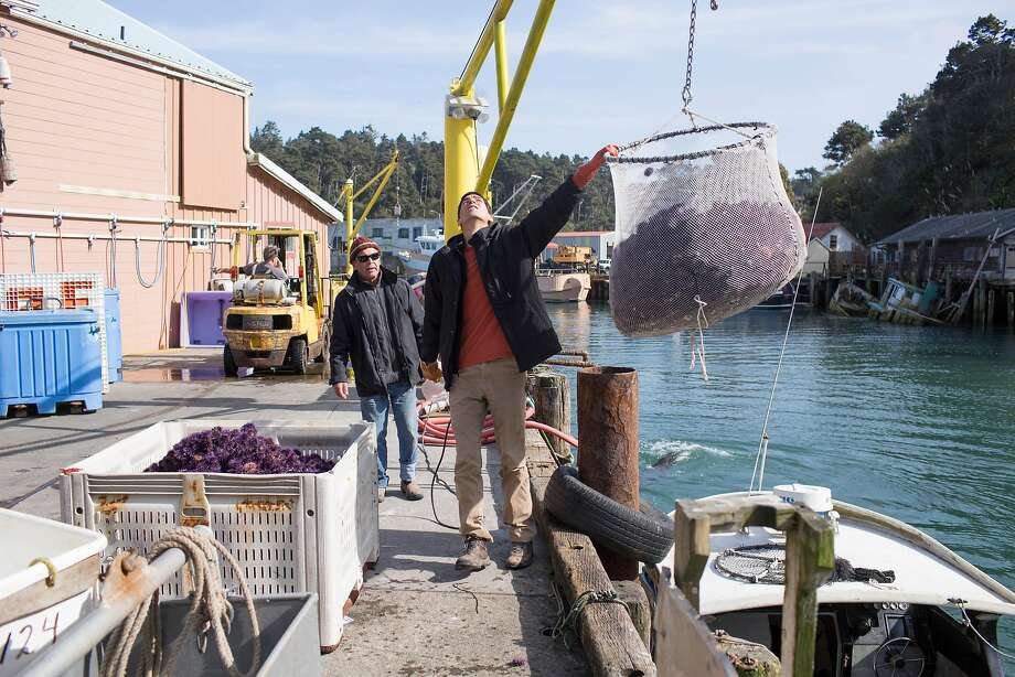 Jon Holcomb, left, watches as Brandon Juntz drops a net filled with purple sea uchins in Fort Bragg on April 3, 2018. Northern California's recreational red abalone season has been closed because of dwindling populations. Photo: Brian Feulner / Special To The Chronicle