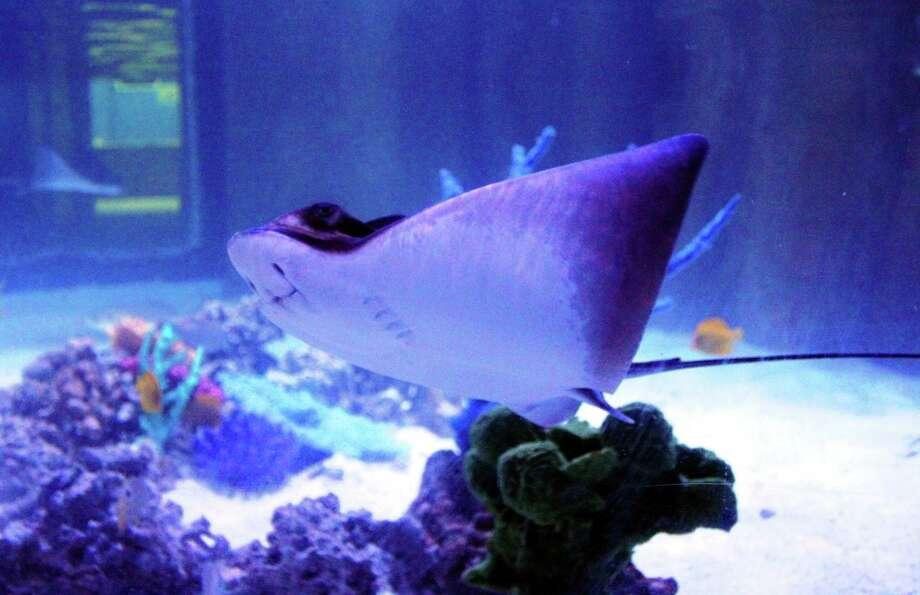 San Antonio Aquarium was forced to close twice on Saturday, March 21, 2020, by Leon Valley police for violating Texas, Bexar County and Leon Valley emergency declarations, police said. Photo: San Antonio Aquarium