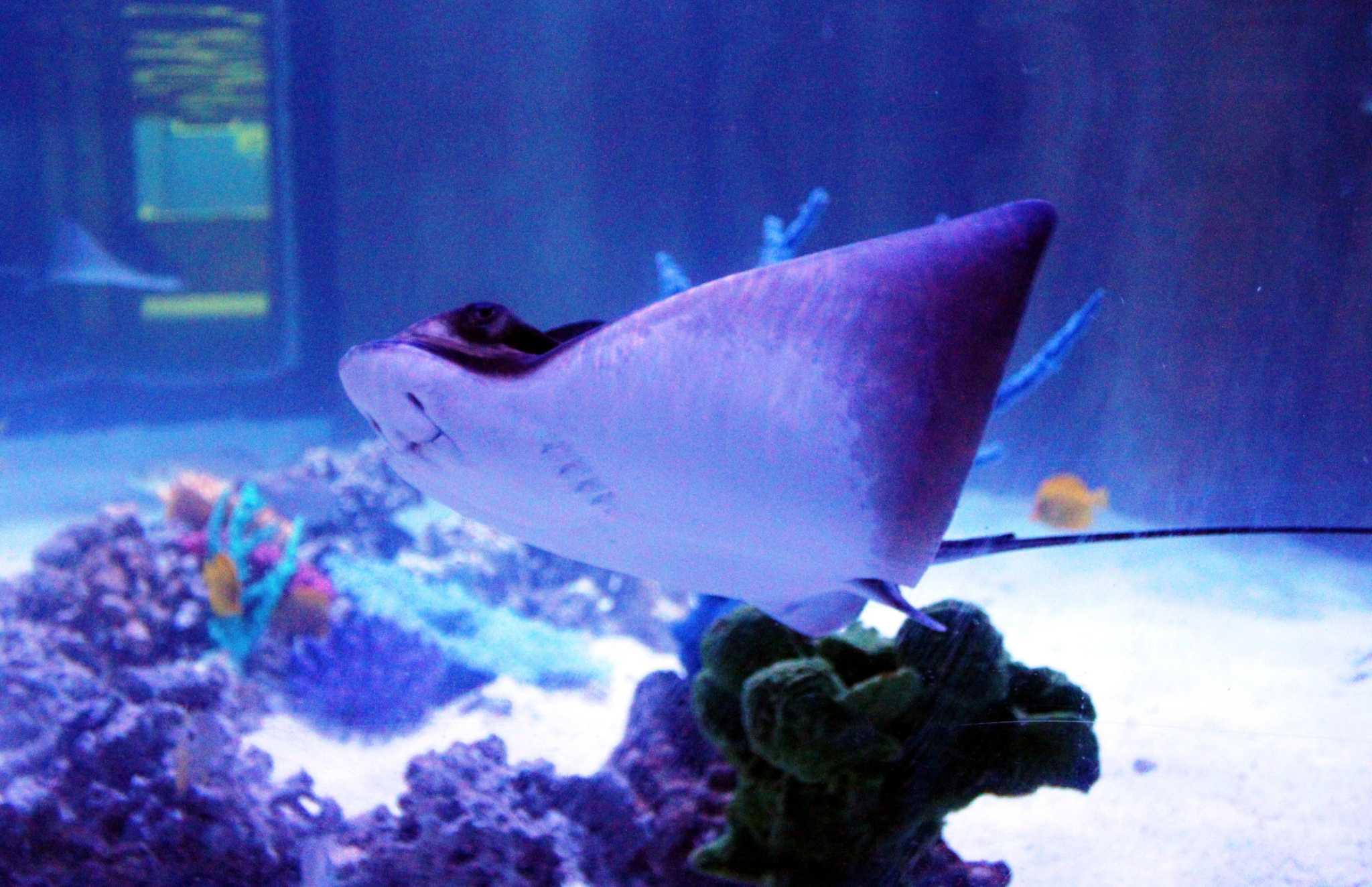 san antonio aquarium, 6320 bandera rd, leon valley, tx 78238