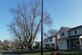 The wireless technology pole installed in front of Cindy Coons' home on Pinehurst Avenue in Albany. (Chris Churchill / Times Union)