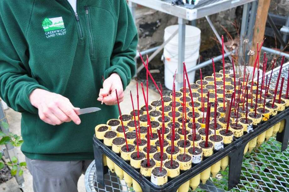 Join the Greenwich Land Trust staff and its partners from the Greenwich Botanical Center for a hands-on lesson on seed-to-seed growth. Experts will explain the techniques used to produce new plants for your own garden from simple cut stems and branches. The workshop will be from 10 a.m. to noon Dec. 19at 370 Round Hill Road. Registration required at https://gltrust.org/events or by emailing sophie@gltrust.org. Free for members, $10 for nonmembers. Photo: / Contributed Photo