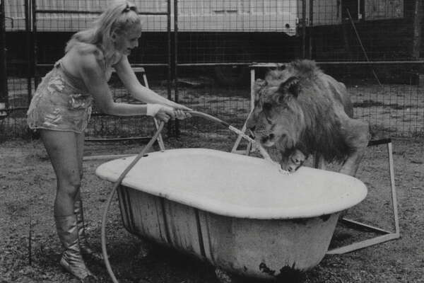 "Lake George, New York - Lion tamer Harriet Beatty, daughter of famed Clyde Beatty, gives one of the beasts she works with a cooling drink during a record breaking wave in the Adirondack Mountains during the Labor Day weekend. Miss Beatty is appearing at ""Storytown, USA,"" located at this resort village. September 02, 1969 (Times Union Archive)"
