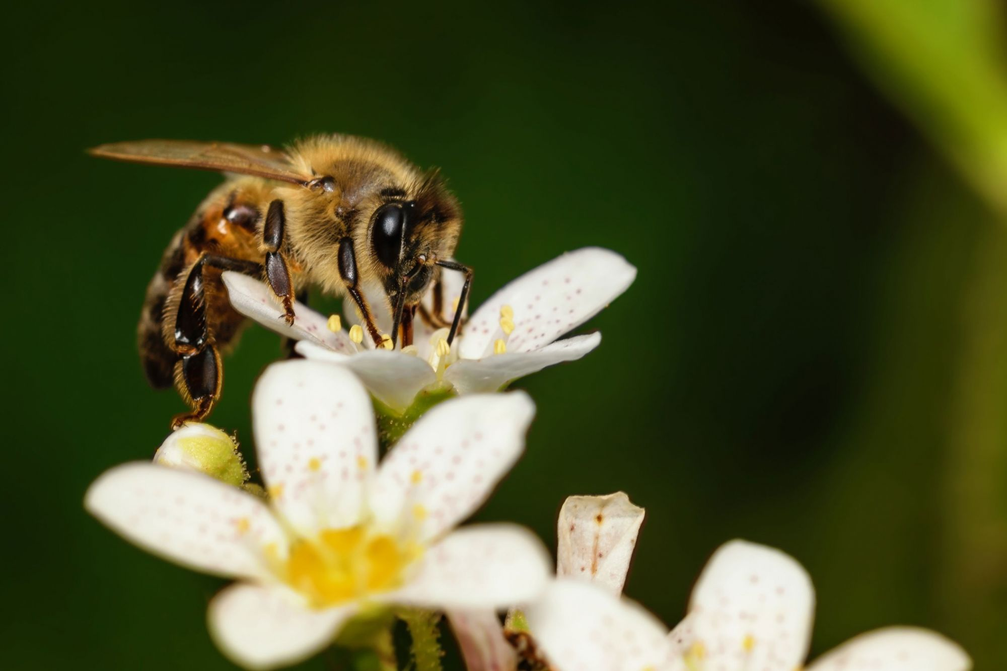 Call Them Canna-Bees  How Cannabis Helps Bees and Vice Versa