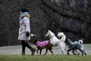 A dog lover takes her crew for a romp in Albany, N.Y. this month. The farm bill would outlaw killing dogs for eating.