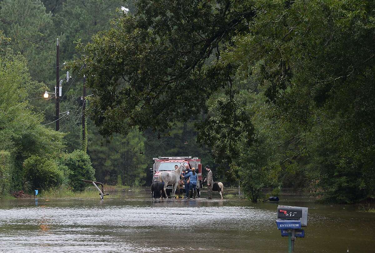 Bevil Oaks residents are assisted by a Jefferson County fire crew as horses are moved to higher ground and others make their way out through the rising waters following Monday's issuance of a mandatory evacuation. Pine Island Bayou is rising rapidly, and the flooding is expected to exceed 1994's 27 foot flood by at least 4 feet, according to residents. Photo taken Monday, August 28, 2017 Kim Brent/The Enterprise