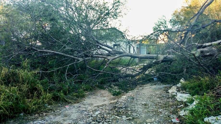 Varias calles a lo largo de Paseo Colón, Reforma y Obregón fueron obstruidas con ramas de árboles. Photo: Foto De Cortesía /Gobierno Municipal De Nuevo Laredo
