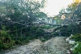 Varias calles a lo largo de Paseo Colón, Reforma y Obregón fueron obstruidas con ramas de árboles.