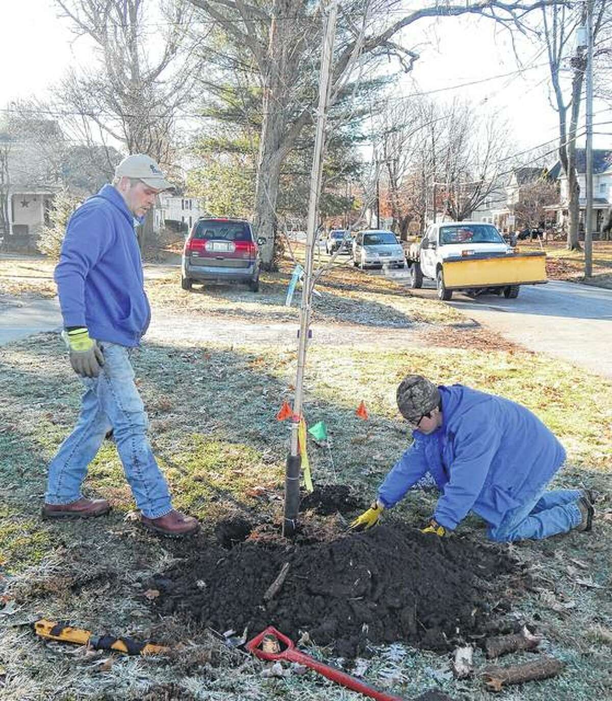 Jake Weimer (left) and Will Carrillo of Hembrough Tree and Lawn Care plant a Legacy maple tree on Monday morning in the 200 block of Caldwell Street. The tree, part of a Jacksonville Rotary Club project to bolster the city's tree canopy, is one of six that were to be planted Monday, bringing the project total to date to around 50 trees, Rotary member Mike Flynn said.