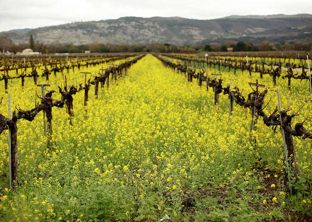 The best wineries along Napa's Highway 29
