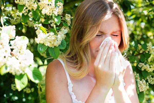 Cedar fever triggers a variety of allergy symptoms, including congestion, runny nose, itchy, watery eyes.
