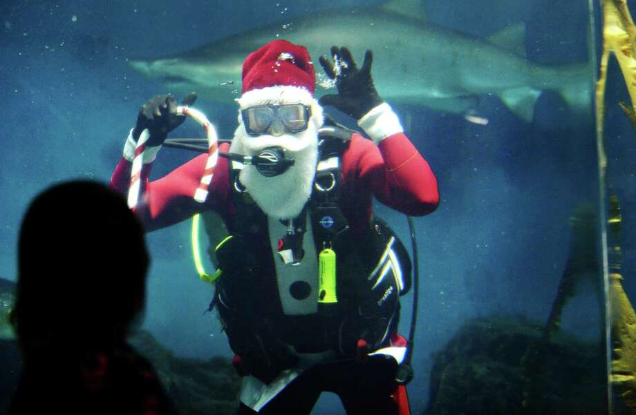 "Volunteer Tom Thomes plays Santa Claus as he joins The Maritime Aquarium's dive team Thursday, December 20, 2018, in the Aquarium's 110,000-gallon ""Ocean Beyond the Sound"" exhibit, which is home to 7- and 8-foot sharks, in Norwalk, Conn. Several times each week through the holiday season Santa dives with a regular Aquarium program where guests can see and talk with volunteer divers swimming in the exhibit. The purpose of the dives is to correct common misperceptions about sharks, as the divers demonstrate how sharks do not see humans as prey. The Santa dives continue at 12:15pm and 2:15 pm on the December 22, 23, 27, 29 and 30. Photo: Erik Trautmann / Hearst Connecticut Media / Norwalk Hour"