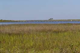 Holiday visitors from out-of-town will enjoy the bay side of Galveston Island State Park where birds abound.