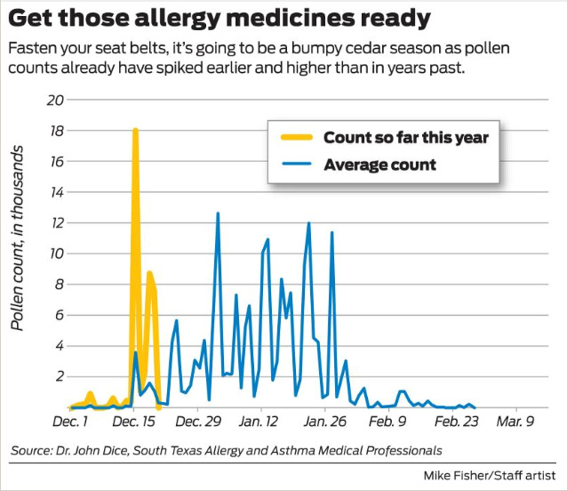 Cedar allergies to reach fever pitch this winter in San
