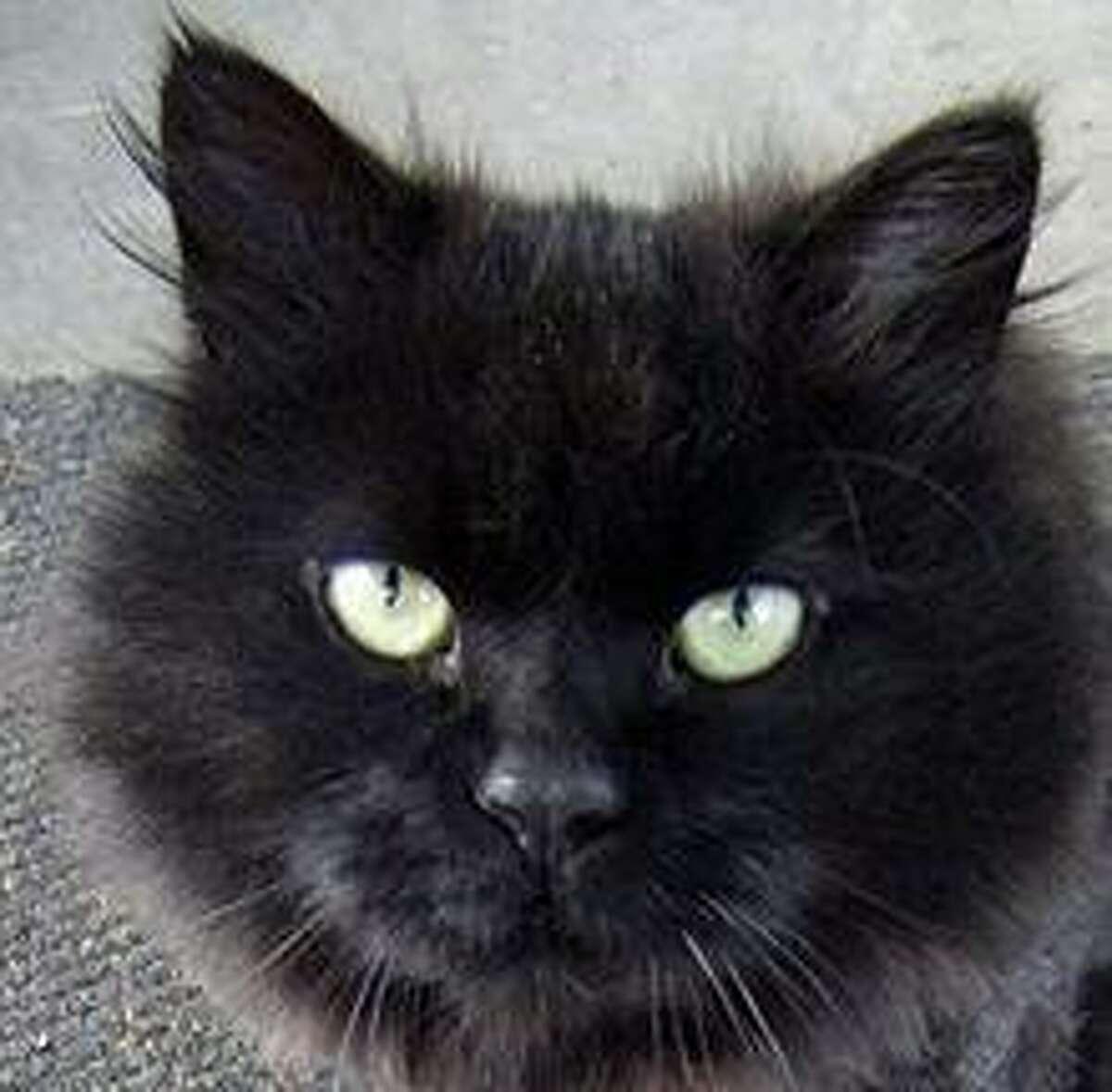 Jon Saunders' cat, Boo.