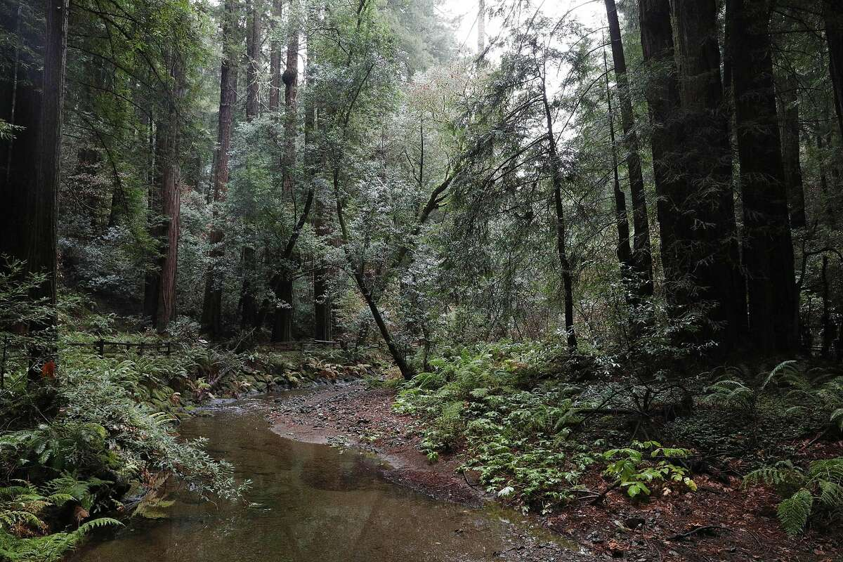 A view of Muir Woods National Monument is seen on Wednesday, December 19, 2018 inn Mill Valley, Calif.