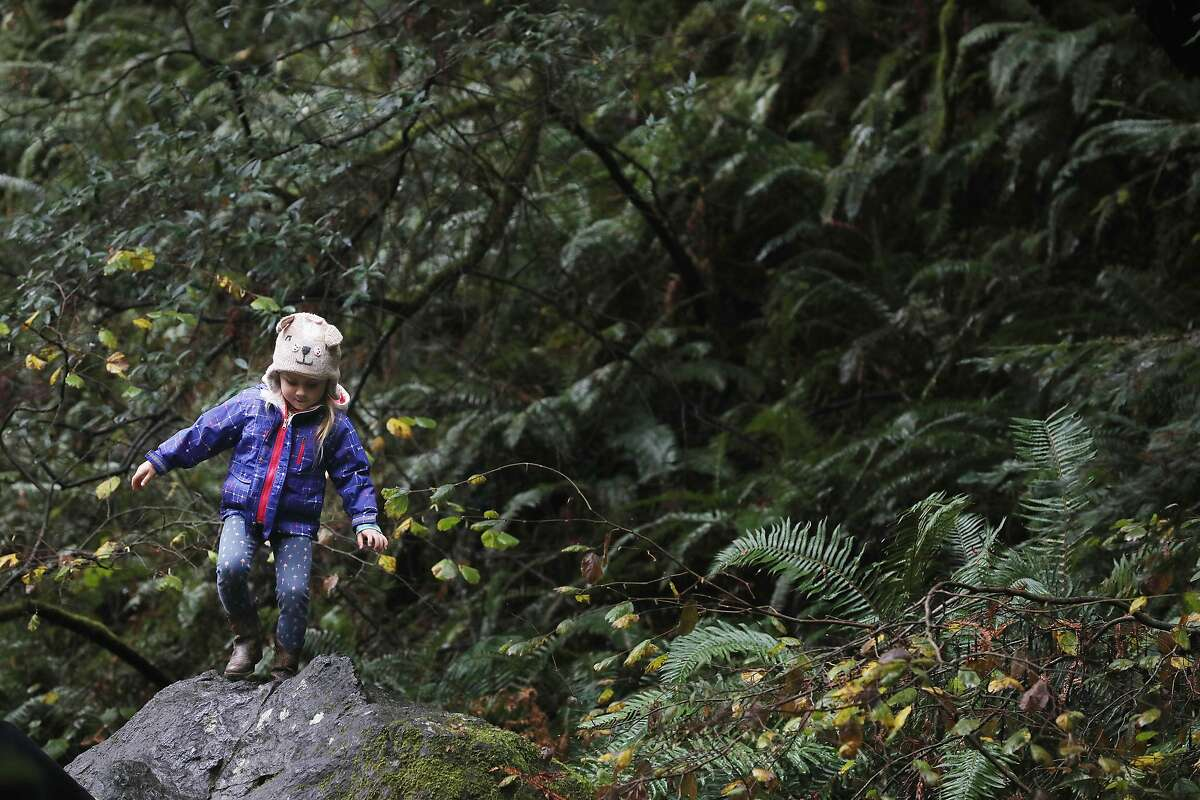 Avery Williams, 5, of Castro Valley walks on a large rock during a visit to Muir Woods on Wednesday, December 19, 2018 in Muir Woods National Monument in Mill Valley, Calif.