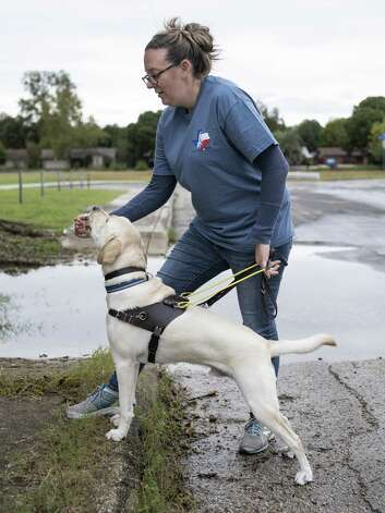 Jamie Massey, director of training at Guide Dogs of Texas, rewards her guide dog in-training Ike with a treat as he stops and alerts her before climbing a step in front of him and continuing on, outside of the Guide Dogs of Texas training facility in San Antonio on Friday, November 9, 2018. The guide dogs must be able to alert their legally blind owners of such obstacles as they appear. Photo: Matthew Busch, For The San Antonio Express-News / For The San Antonio Express-News / © Matthew Busch