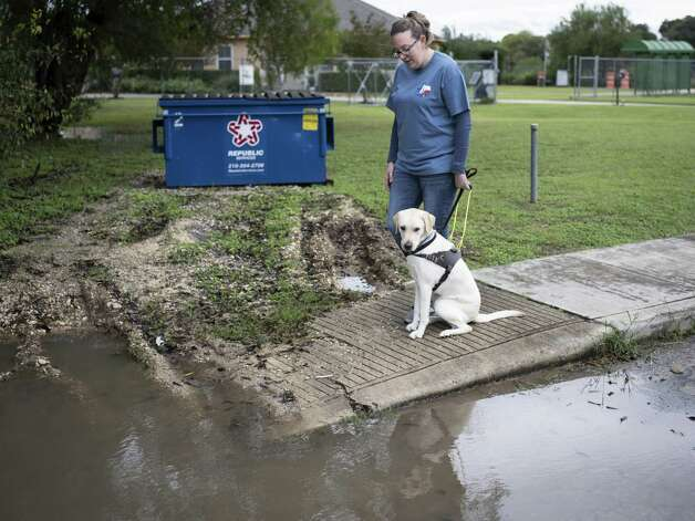 Jamie Massey, director of training at Guide Dogs of Texas, watches as her guide dog in-training Ike stops and assesses the obstacle, in this case a water puddle and broken sidewalk, in front of him before alerting his owner and continuing on, outside of the Guide Dogs of Texas training facility in San Antonio on Friday, November 9, 2018. The guide dogs must be able to alert their legally blind owners of such obstacles as they appear. Photo: Matthew Busch, For The San Antonio Express-News / For The San Antonio Express-News / © Matthew Busch