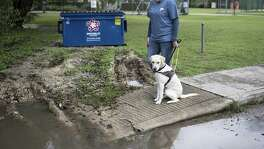 Jamie Massey, director of training at Guide Dogs of Texas, watches as her guide dog in-training Ike stops and assesses the obstacle, in this case a water puddle and broken sidewalk, in front of him before alerting his owner and continuing on, outside of the Guide Dogs of Texas training facility in San Antonio on Friday, November 9, 2018. The guide dogs must be able to alert their legally blind owners of such obstacles as they appear.