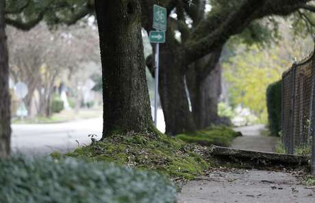 A sidewalk, raised up due to tree roots that run under the concrete, on Bayland Street in the Heights, Wednesday, Dec. 19, 2018, in Houston.