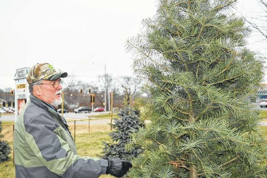 Ray Long of Winchester looks at Christmas trees at Anderson's Tree lot on West Morton Avenue last week.