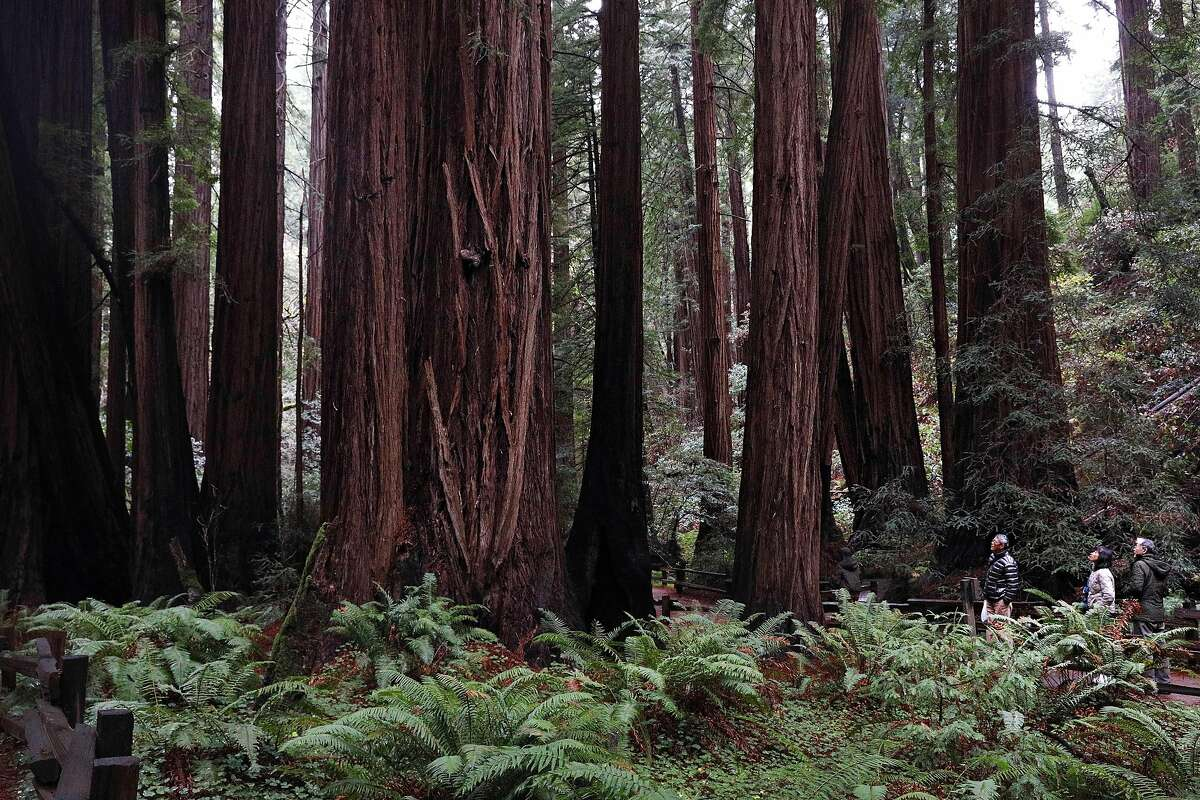 Visitors take in the view as they stand next to redwood trees on Wednesday, December 19, 2018 in Muir Woods National Monument in Mill Valley, Calif.