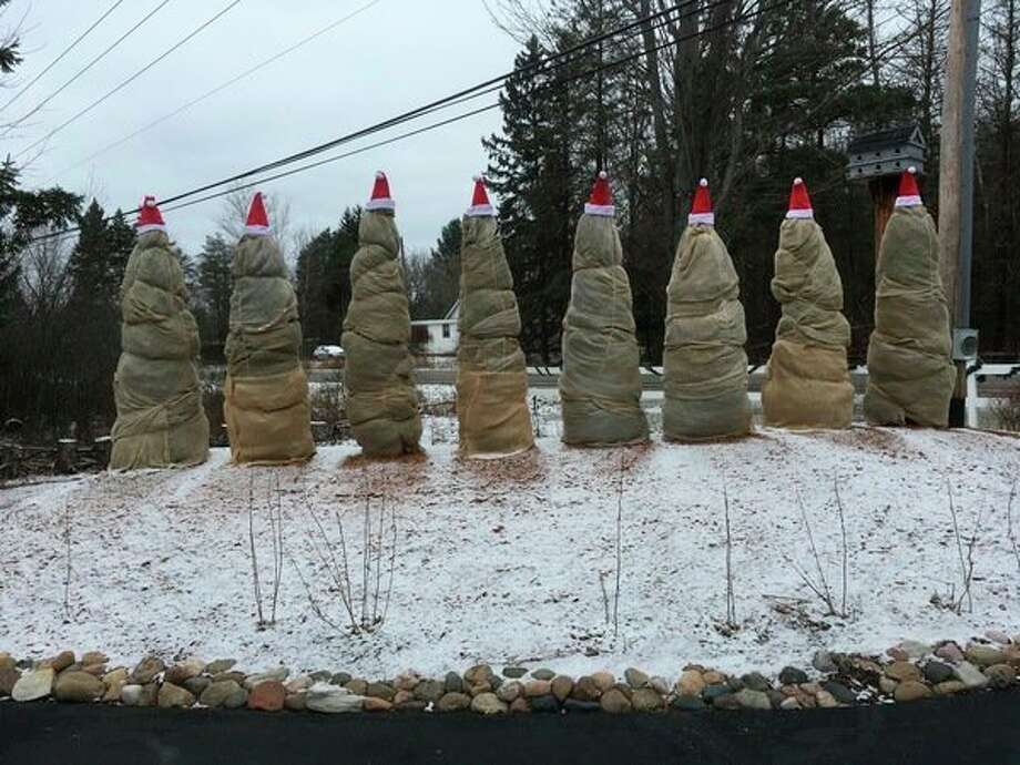 A resident onMonroe Road between Eastman and Jefferson celebrates the season with a holiday display of some winterized plants. (Dot Hornsby/for the Daily News)