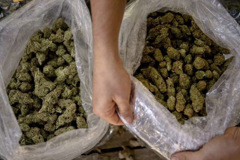 Bags of marijuana outside of Covelo, Calif., Oct. 22. A reader responds to an oped on voter approval of recreational or medical marijuana. Photo: HILARY SWIFT /NYT / NYTNS