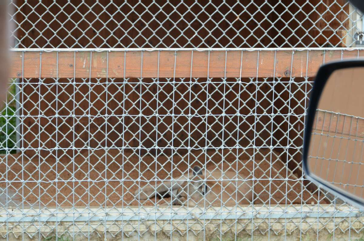 The Animal Legal Defense Fund, which sued the Olympic Game Farm last week, offered several photos they believe depict animal suffering, neglect and confinement on the Sequim, Wash. property.