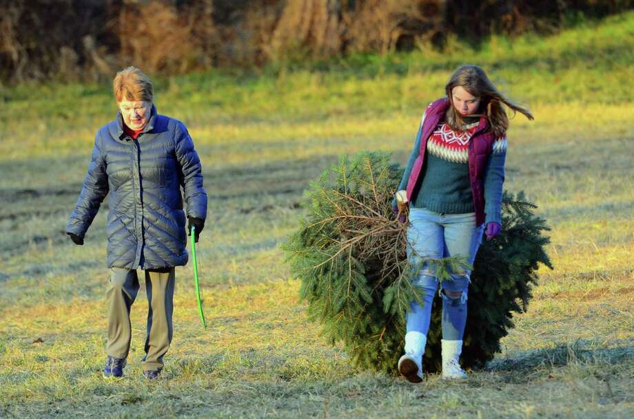 Sue Boughton, of Danbury, walks with her granddaughter Erin Schechter with the perfect Christmas tree while at Paproski's Tree Farm in Newtown, Conn., on Friday Nov. 23, 2018. Friday was the opening day of tree cutting for the public at the farm, which is open on Mondays through Fridays from 2 pm to 5 pm and on Saturdays and Sundays from 10 am to 5 pm. Photo: Christian Abraham / Hearst Connecticut Media / Connecticut Post