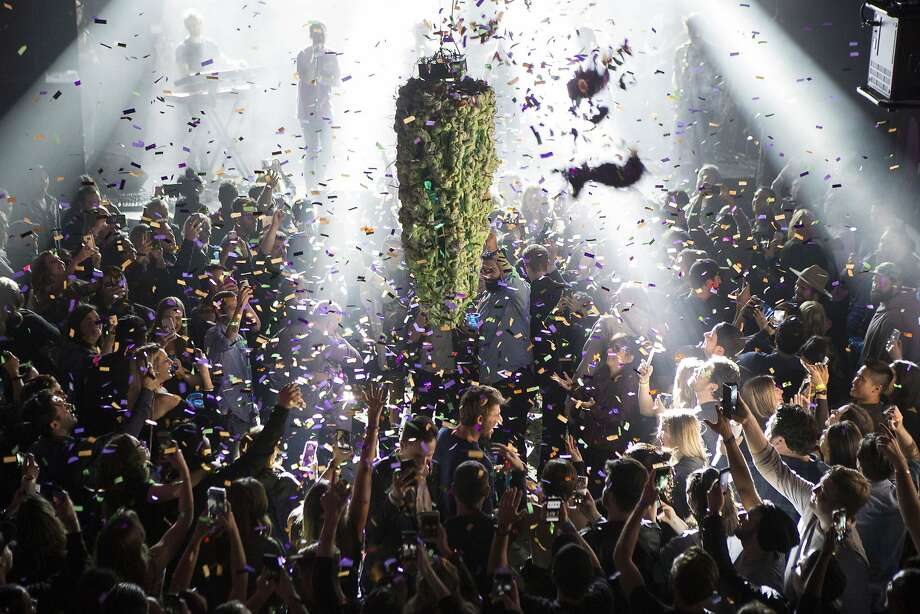 Cannabis buds drop from the ceiling at a party in Toronto for employees of a pot website. They were celebrating the first day of legalization across Canada. Photo: Chris Young / Associated Press