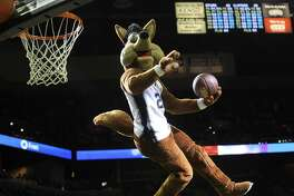 The Spurs Coyote