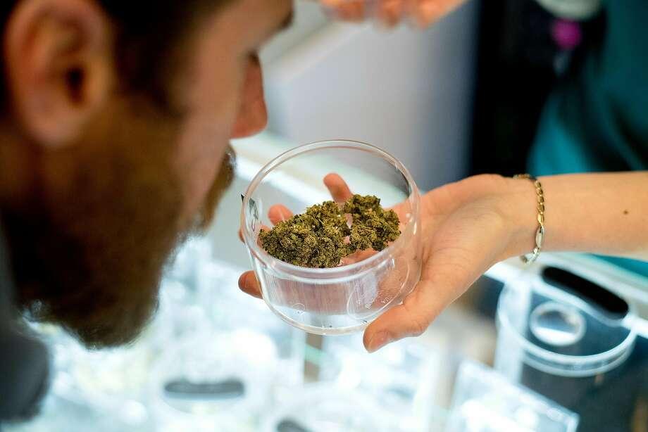 Matt Kurth, owner of Humboldt Cannabis Tours, smells marijuana at the Ecocann dispensary in Eureka. Photo: Noah Berger / Special To The Chronicle