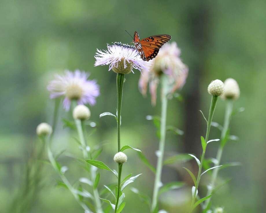 Houston Arboretum hosts annual Spring Native Plant Sale on April 19-20