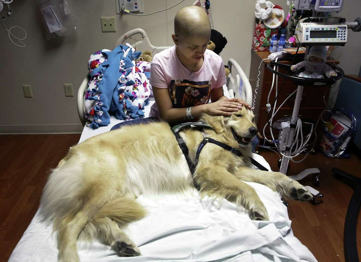 Yadi Benavides, a cancer patient at Methodist Children's Hospital, pets Hazel, a facility dog. Hazel is one of two dogs working at the hospital.