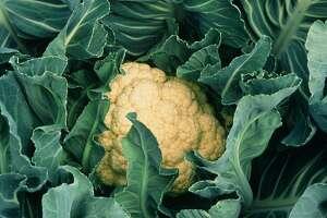 'Snow Crown' cauliflower for the winter garden.