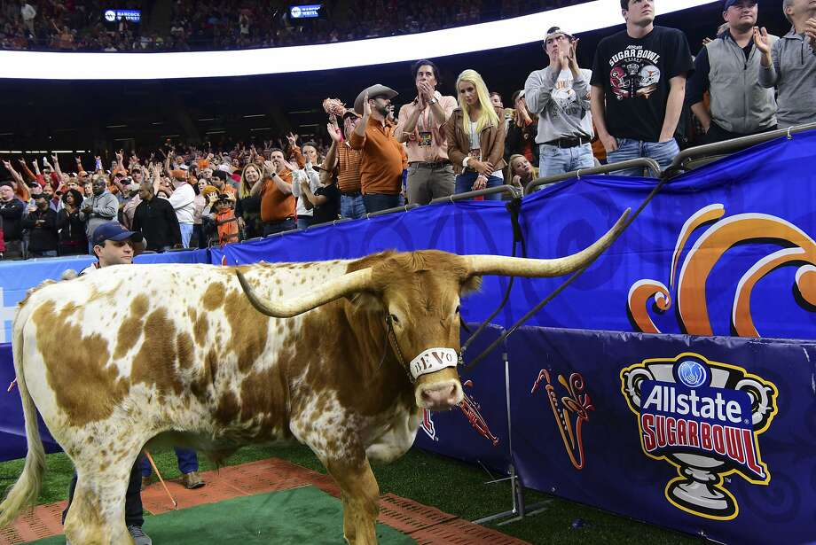 IMAGE DISTRIBUTED FOR ALLSTATE - Bevo the longhorn cheers on the University of Texas as they take on the University of Georgia at the 2019 Allstate Sugar Bowl at the Mercedes-Benz Superdome on Tuesday, Jan. 1, 2018, in New Orleans. (Cheryl Gerber/AP Images for Allstate) Photo: Cheryl Gerber, Associated Press