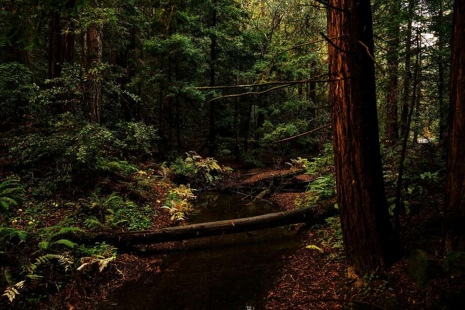 Huge chunk of Northern California redwoods preserved in unusual deal