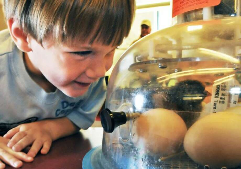 Three-year-old Andrew Wells of Wilton looks into an incubator at the Saratoga Springs Public Library to see their first born baby chick on Wednesday morning May 11, 2011. Photo: John Carl D'Annibale/Times Union