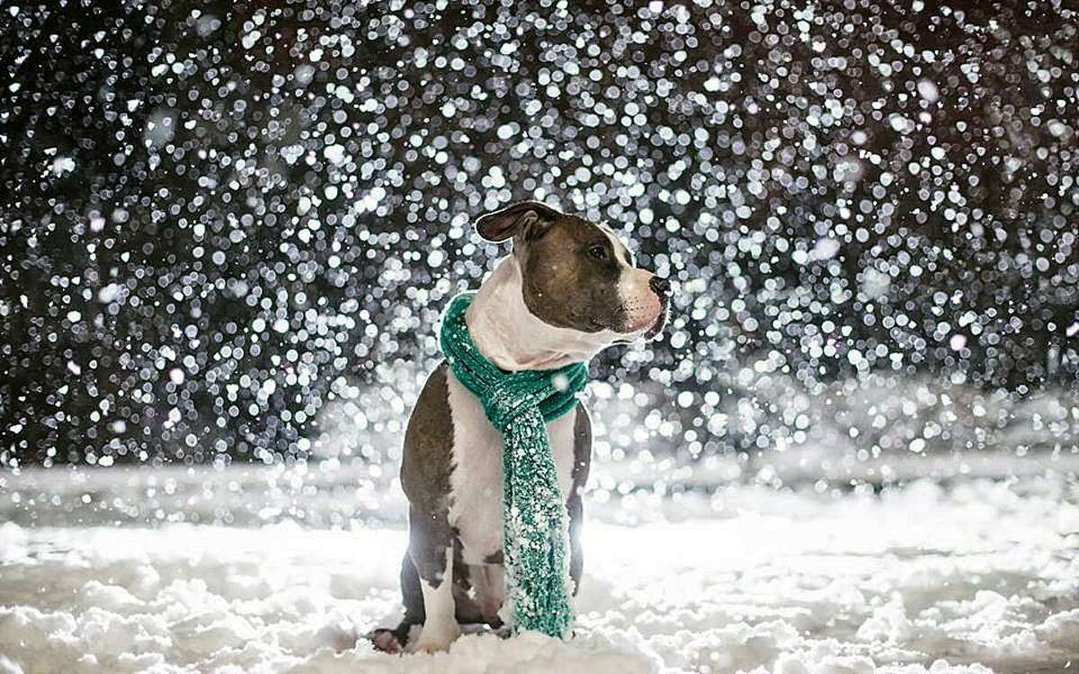 This photo was provided by the Bridgeport Animal Control on Facebook. The photo was partnered with a post about what to do and what not to do when reporting a dog left out in the cold.