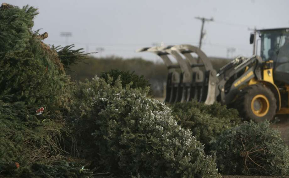 The city of San Antonio's Bitters Brush Recycling Center at 1800 Bitters Road will be among several locations accepting live Christmas trees to recycle into mulch over the next two weekends. Photo: San Antonio Express-News File Photo / jdavenport@express-news.net