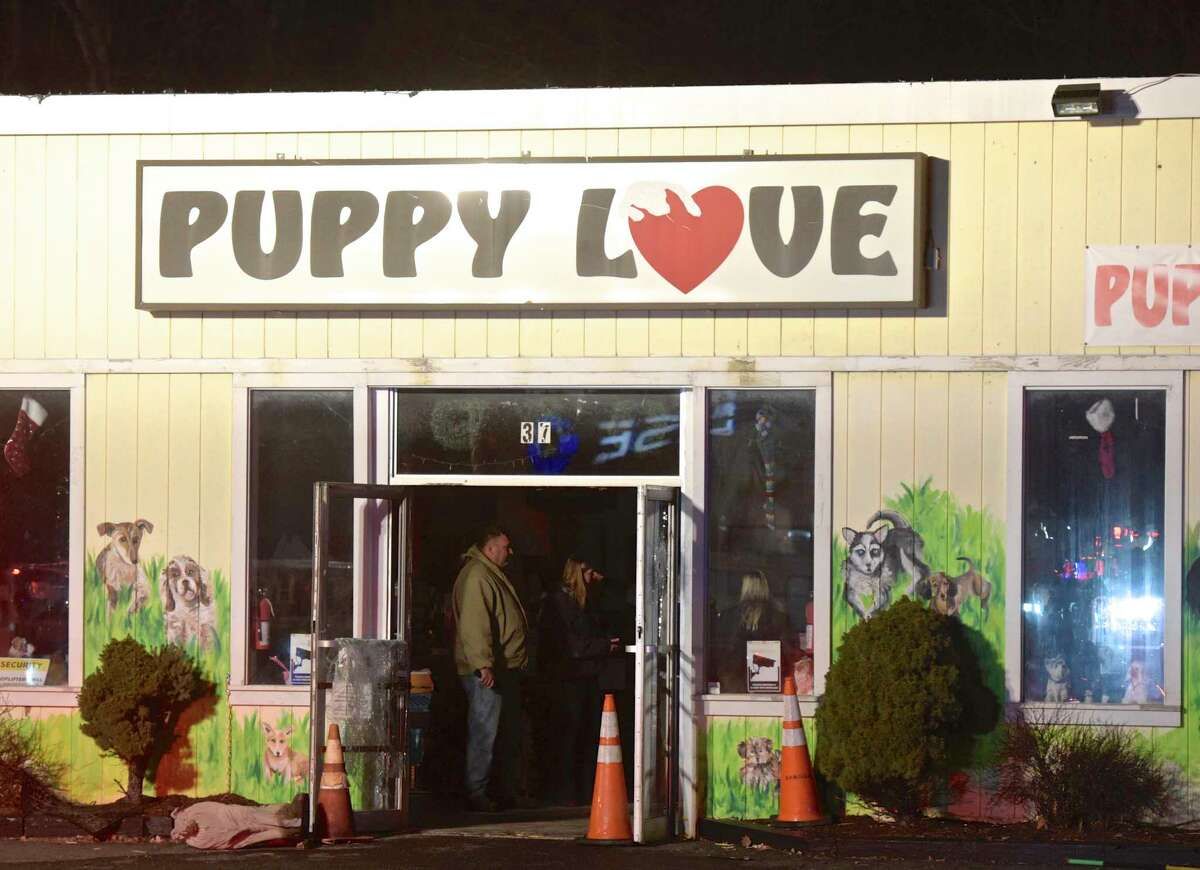86 puppies from Puppy Love, 37 Lake Ave, in Danbury, were removed from the store and transfered to an empty storefront next door after a late night fire behind the store. Thursday, January 3, 2018, in Danbury, Conn.